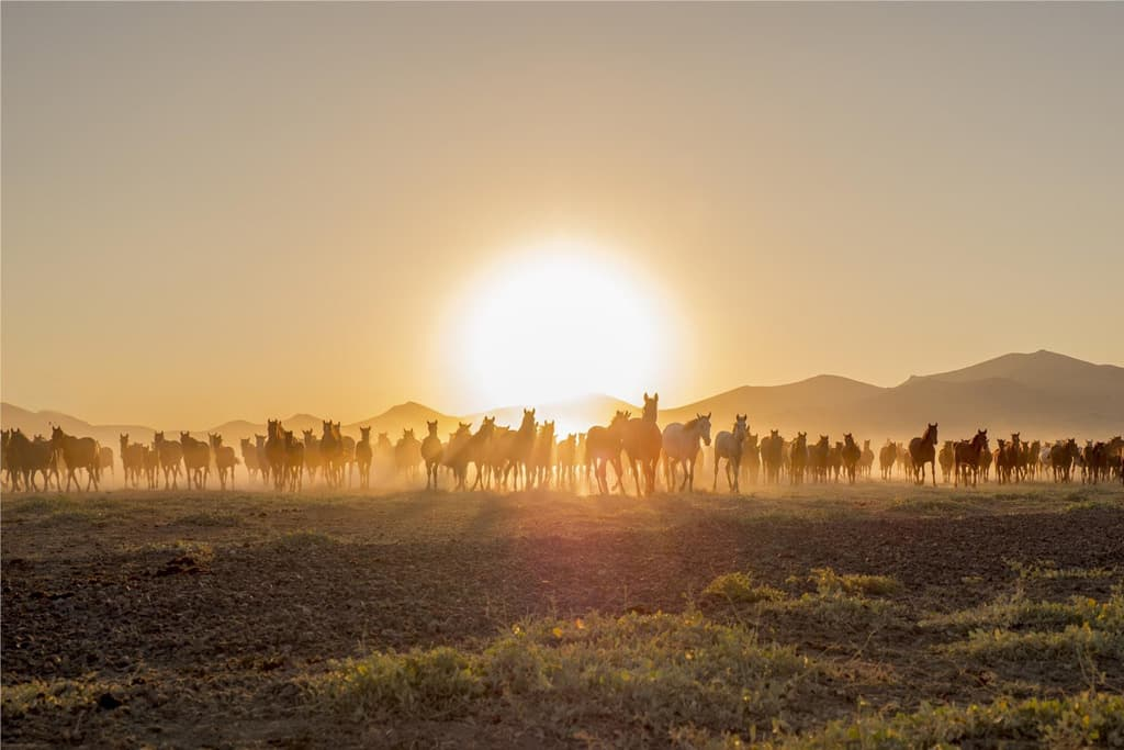 A sunset with hundreds of wild horses in Cappadocia.
